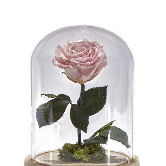 Forever Rose Ροζ
