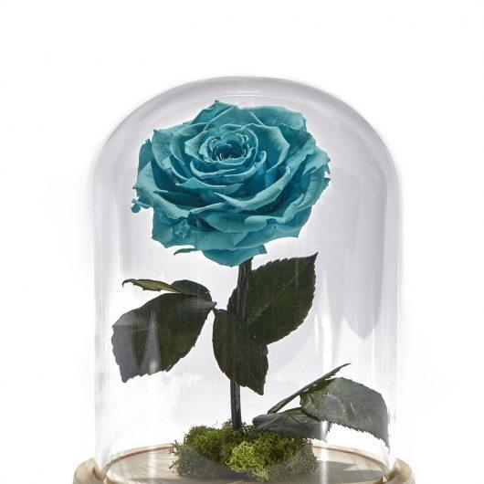 Forever Rose Γαλάζιο
