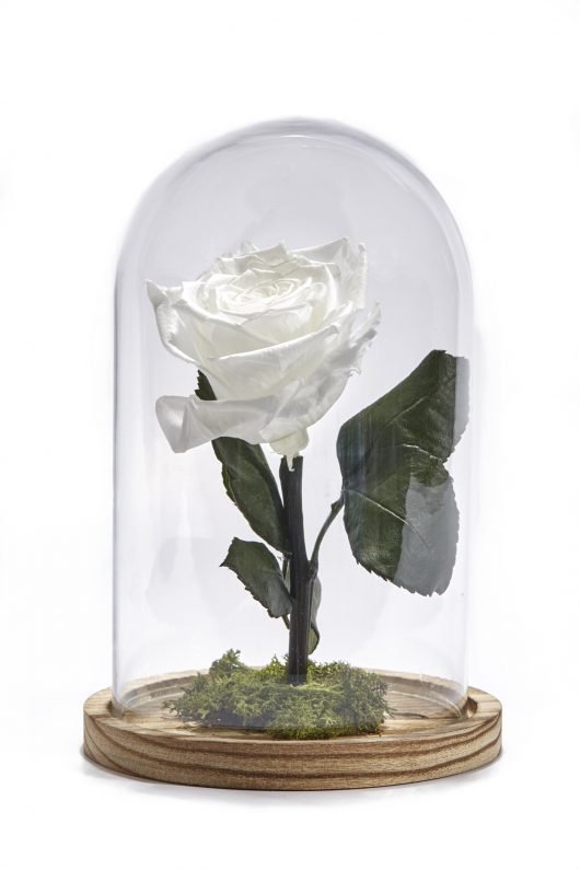 Forever Rose Λευκό