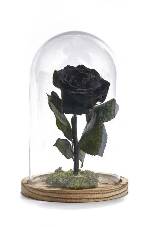 Forever Rose Μαύρο