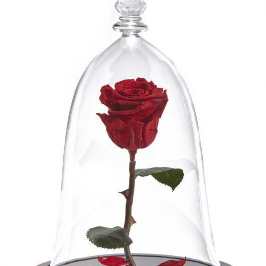 Forever Rose Κόκκινο