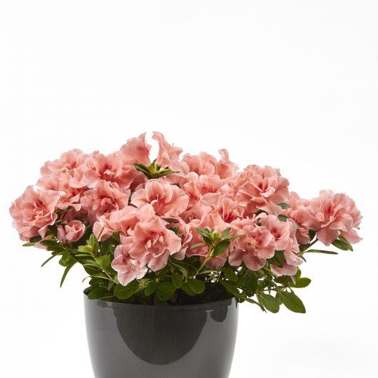 Φυτό Εξωτερικού Χώρου